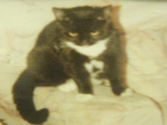 Mickey ( July 1992 - 16th August 1994 )